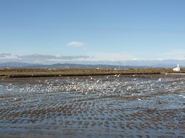 Las aves migratorias. Autor Paula Molina