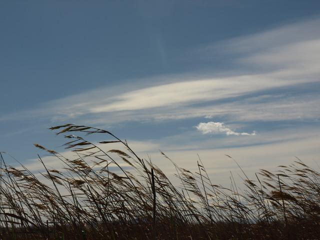 Los cañares y el cielo. Autor Paula Molina